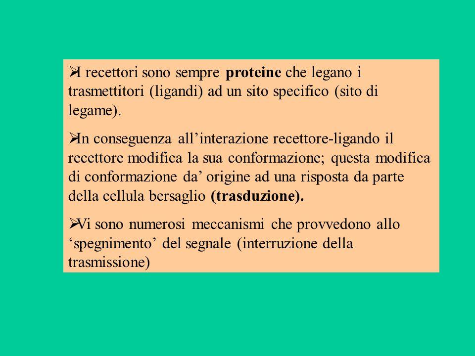 I recettori sono sempre proteine che legano i trasmettitori (ligandi) ad un sito specifico (sito di legame).