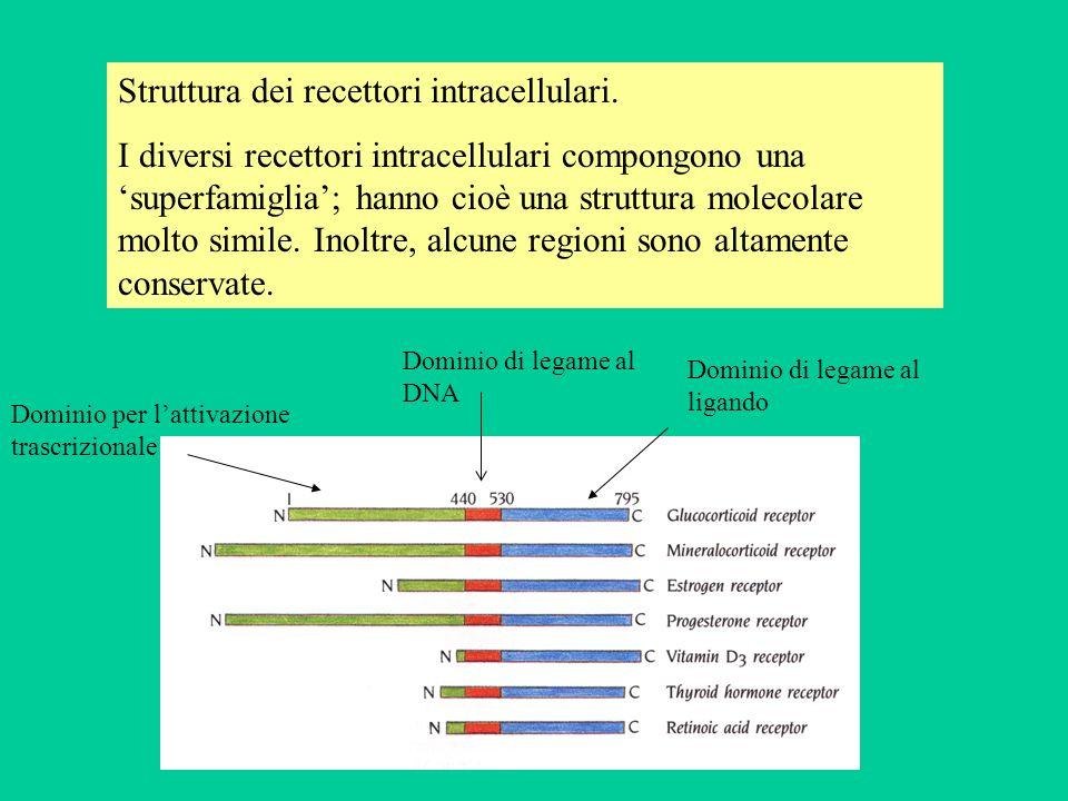 Struttura dei recettori intracellulari.
