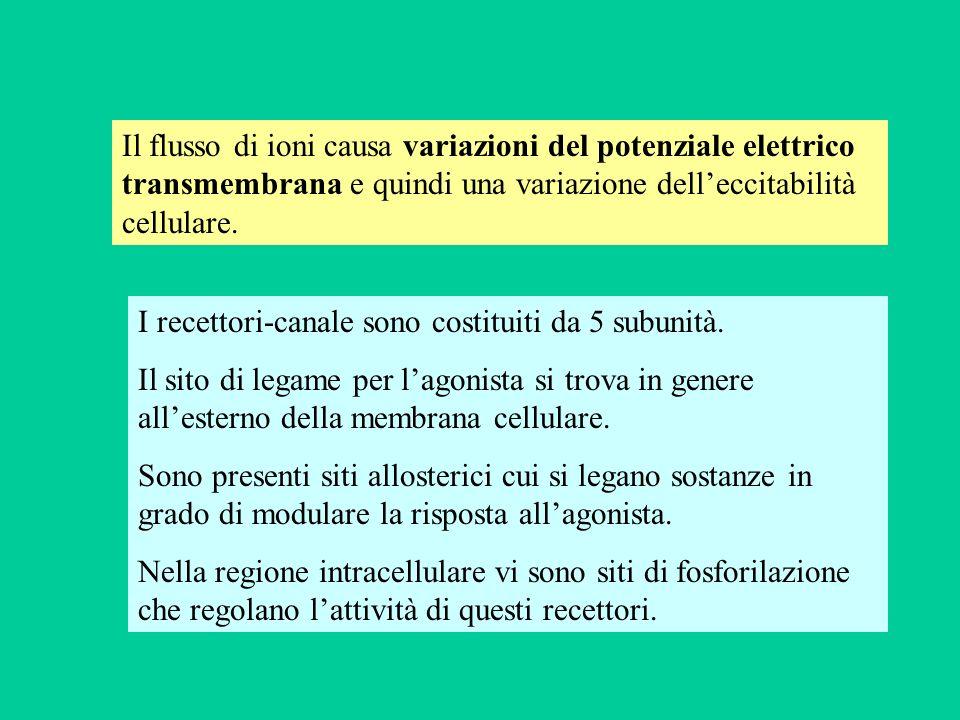Il flusso di ioni causa variazioni del potenziale elettrico transmembrana e quindi una variazione dell'eccitabilità cellulare.