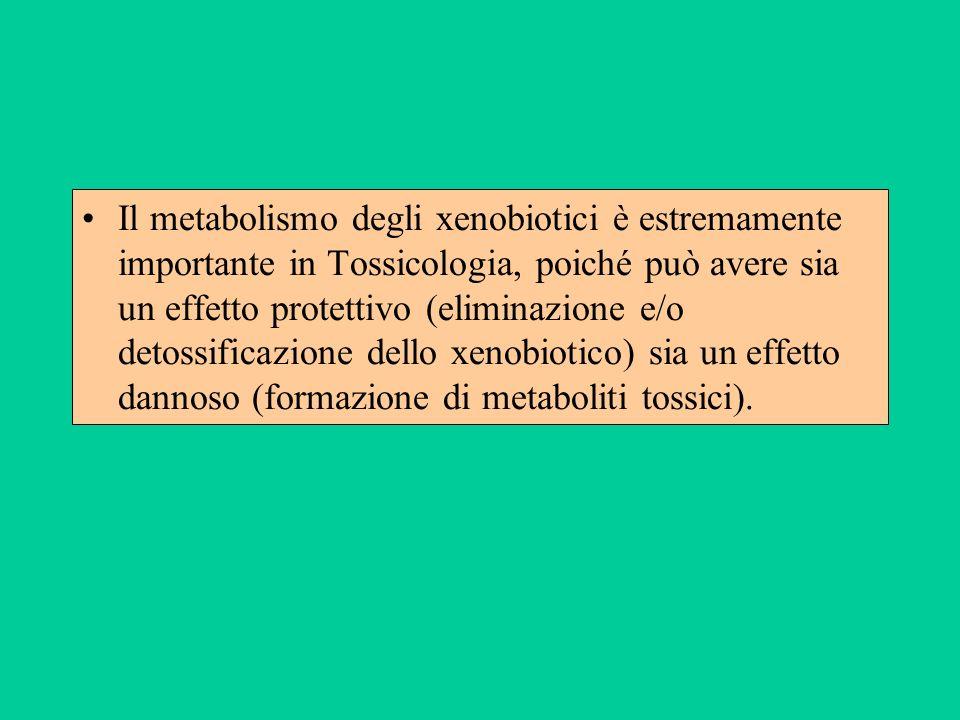 Il metabolismo degli xenobiotici è estremamente importante in Tossicologia, poiché può avere sia un effetto protettivo (eliminazione e/o detossificazione dello xenobiotico) sia un effetto dannoso (formazione di metaboliti tossici).