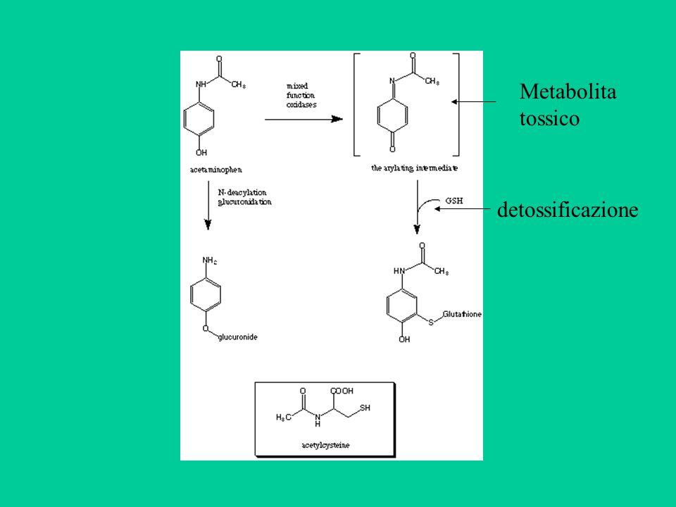Metabolita tossico detossificazione