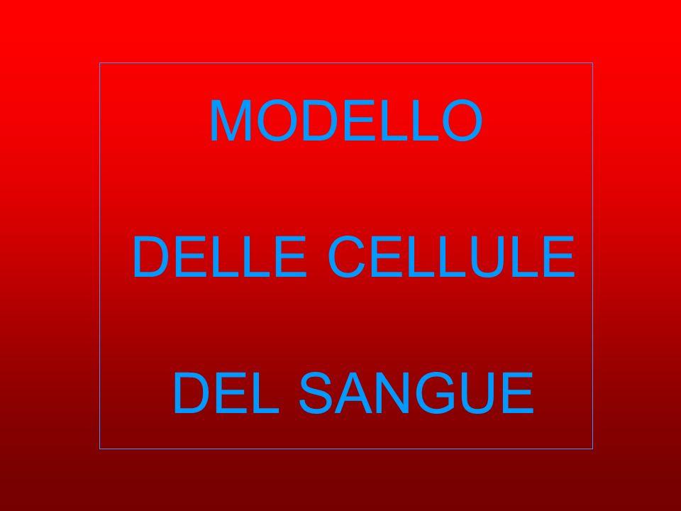 MODELLO DELLE CELLULE DEL SANGUE