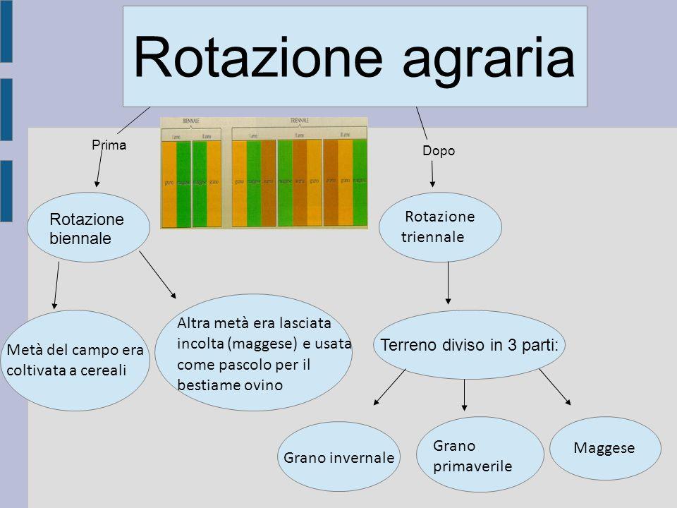Rotazione agraria Rotazione triennale Rotazione biennale