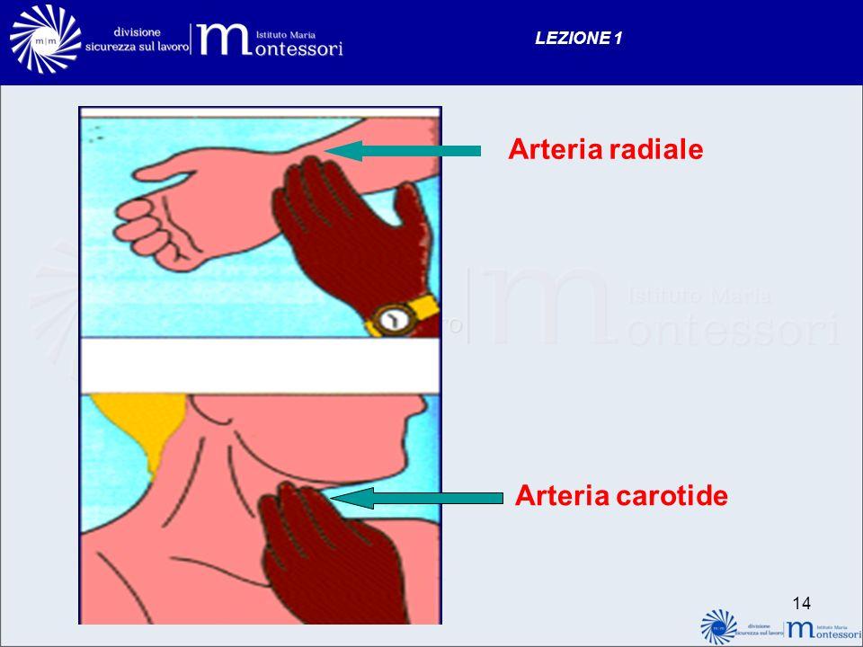 LEZIONE 1 Arteria radiale Arteria carotide