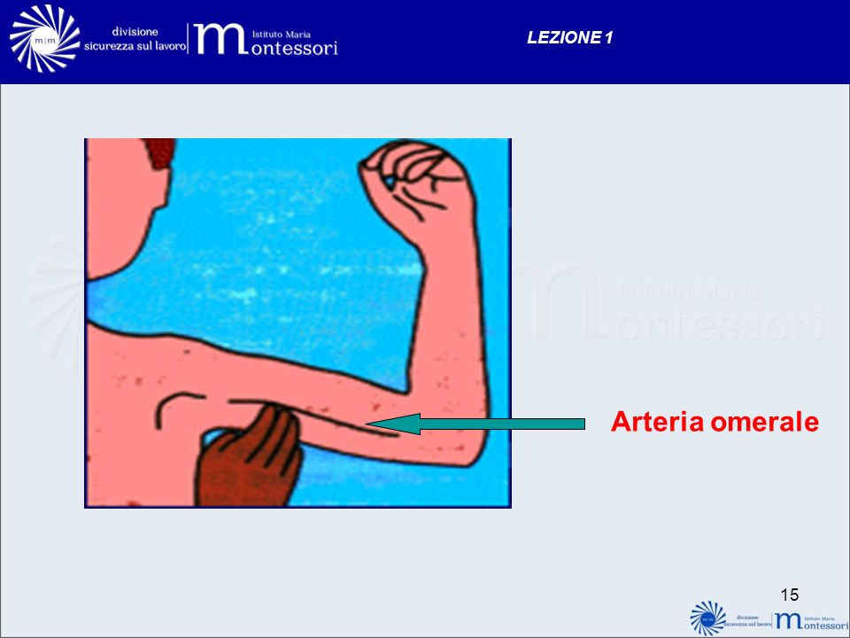 LEZIONE 1 Arteria omerale
