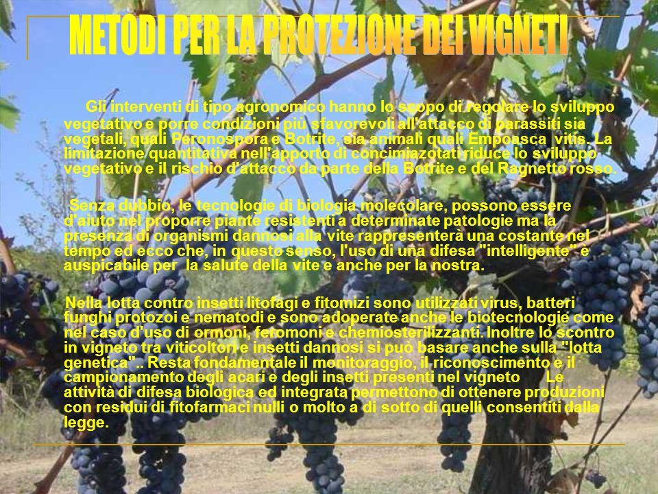 METODI PER LA PROTEZIONE DEI VIGNETI