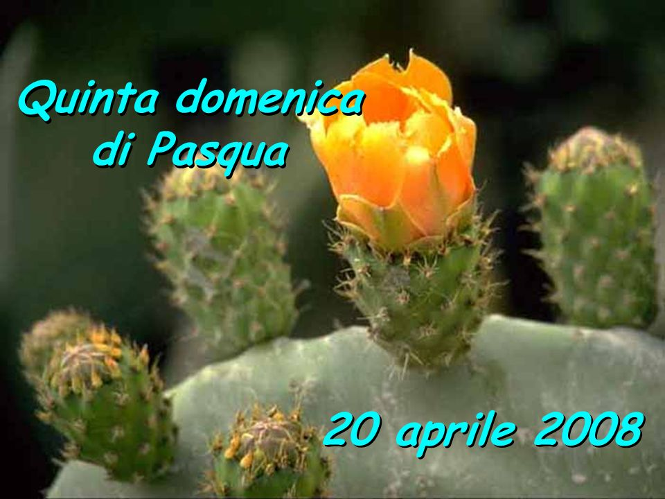 Quinta domenica di Pasqua 20 aprile 2008