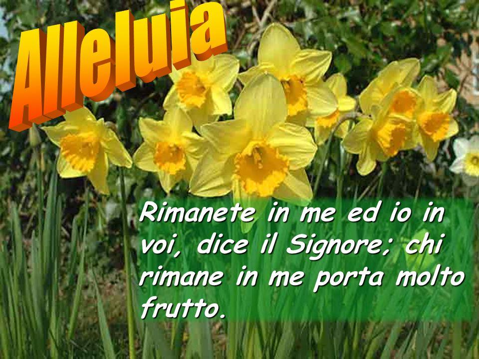Alleluia Rimanete in me ed io in voi, dice il Signore; chi rimane in me porta molto frutto.