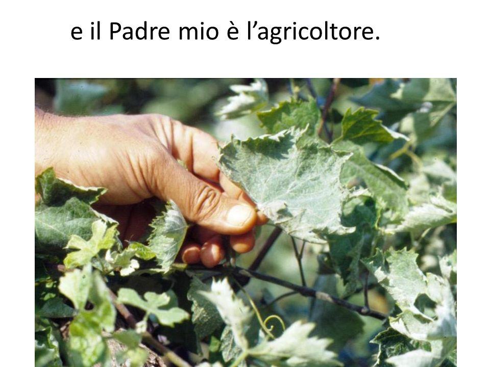 e il Padre mio è l'agricoltore.