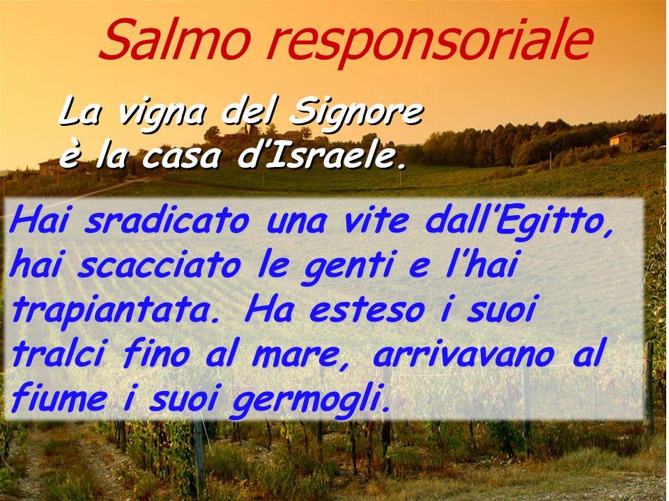 Salmo responsoriale La vigna del Signore è la casa d'Israele.