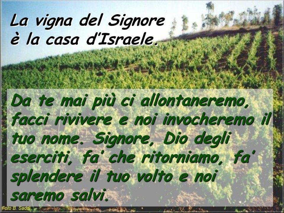 La vigna del Signore è la casa d'Israele.