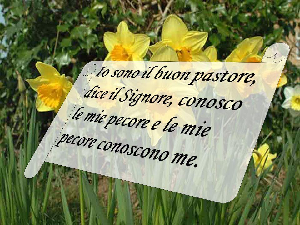 Io sono il buon pastore, dice il Signore, conosco le mie pecore e le mie pecore conoscono me.