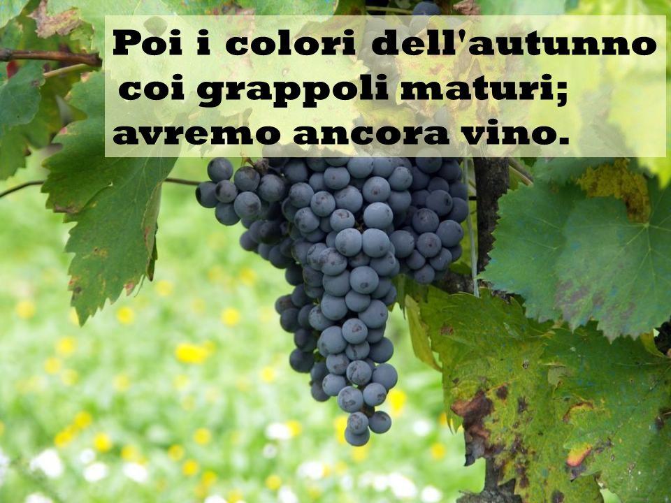 Poi i colori dell autunno coi grappoli maturi;