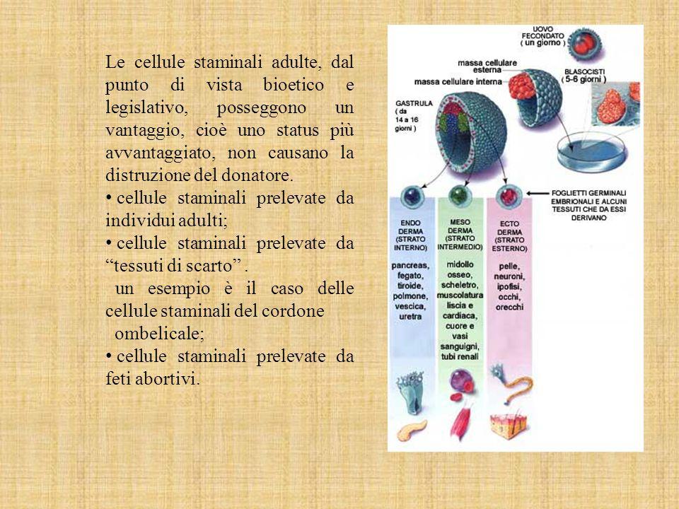 Le cellule staminali adulte, dal punto di vista bioetico e legislativo, posseggono un vantaggio, cioè uno status più avvantaggiato, non causano la distruzione del donatore.