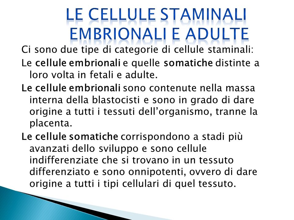 LE CELLULE STAMINALI EMBRIONALI E ADULTE