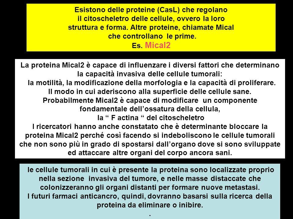 Esistono delle proteine (CasL) che regolano