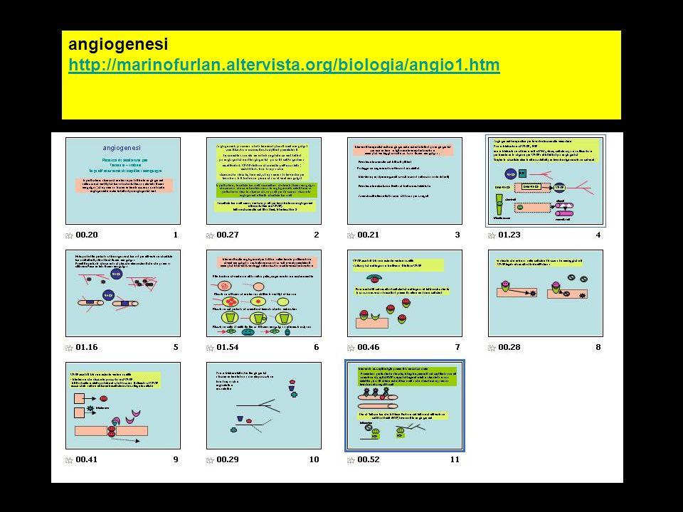 angiogenesi http://marinofurlan.altervista.org/biologia/angio1.htm