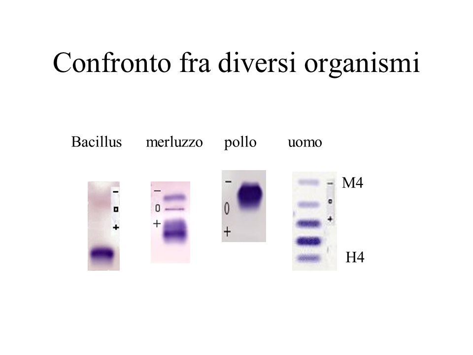 Confronto fra diversi organismi