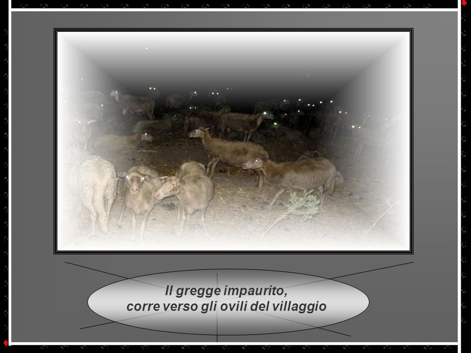 Il gregge impaurito, corre verso gli ovili del villaggio