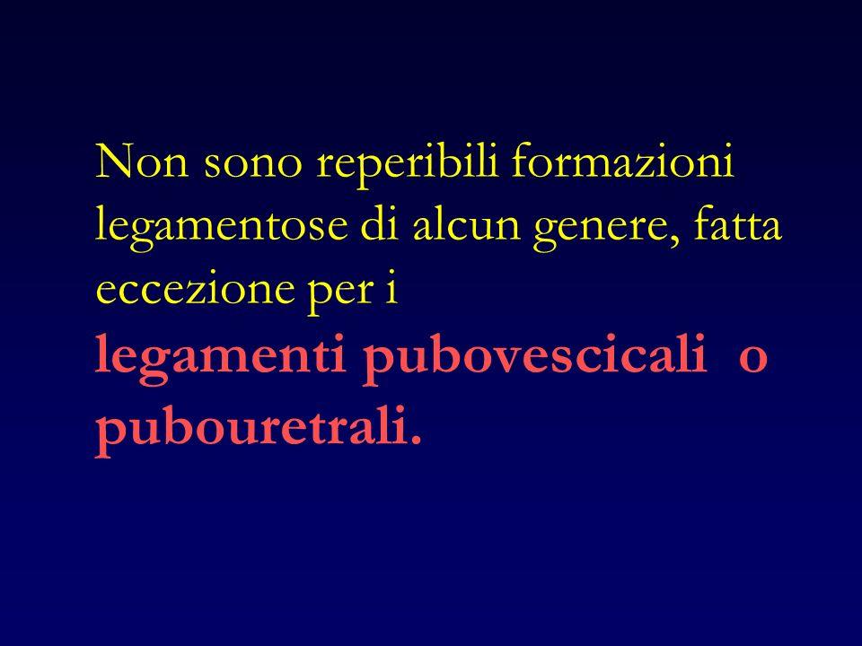 Non sono reperibili formazioni legamentose di alcun genere, fatta eccezione per i legamenti pubovescicali o pubouretrali.