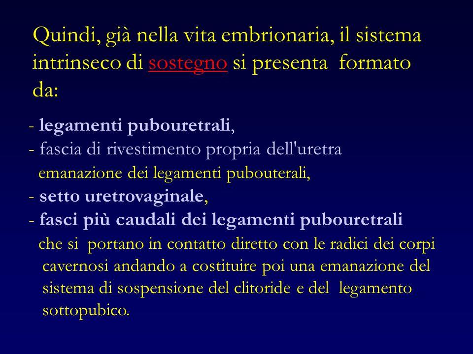 Quindi, già nella vita embrionaria, il sistema intrinseco di sostegno si presenta formato da: