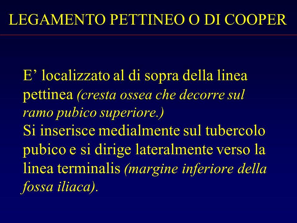 LEGAMENTO PETTINEO O DI COOPER