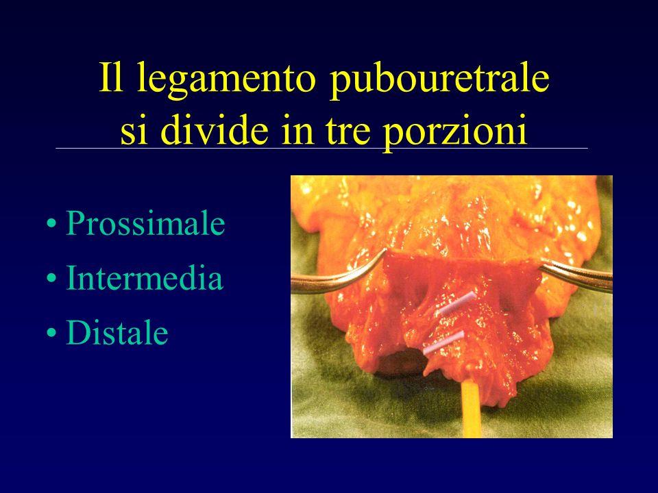 Il legamento pubouretrale si divide in tre porzioni
