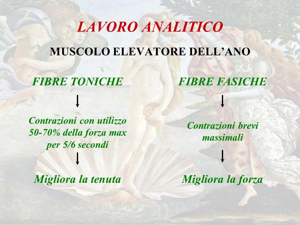 LAVORO ANALITICO MUSCOLO ELEVATORE DELL'ANO FIBRE TONICHE