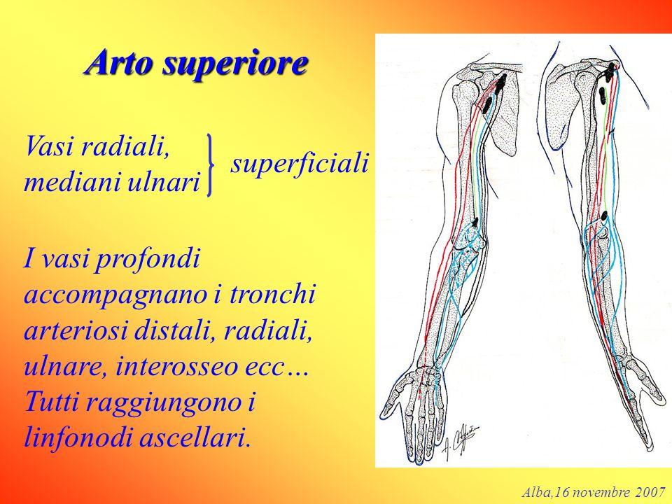 Arto superiore Vasi radiali, mediani ulnari superficiali