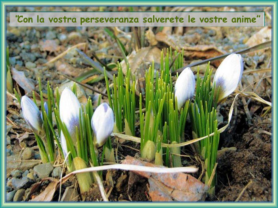 Con la vostra perseveranza salverete le vostre anime