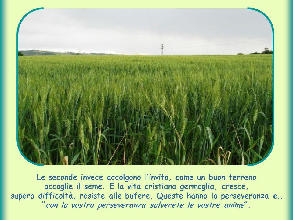 Le seconde invece accolgono l'invito, come un buon terreno accoglie il seme.