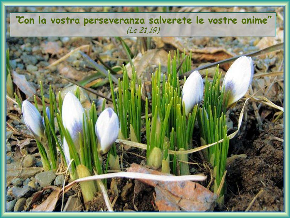 Con la vostra perseveranza salverete le vostre anime (Lc 21,19)