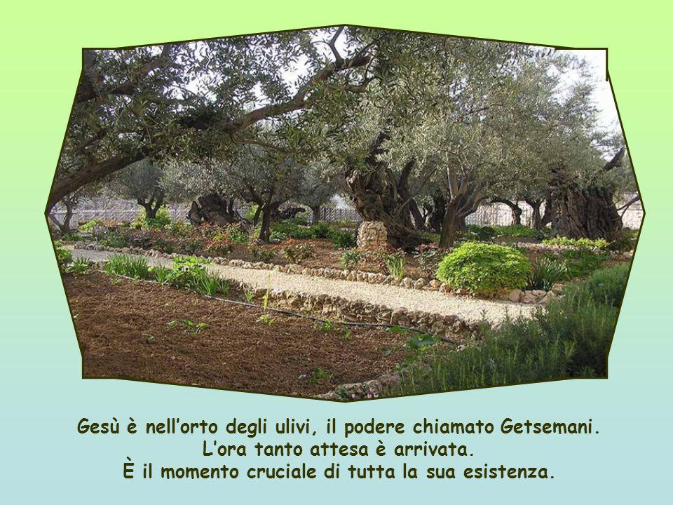 Gesù è nell'orto degli ulivi, il podere chiamato Getsemani