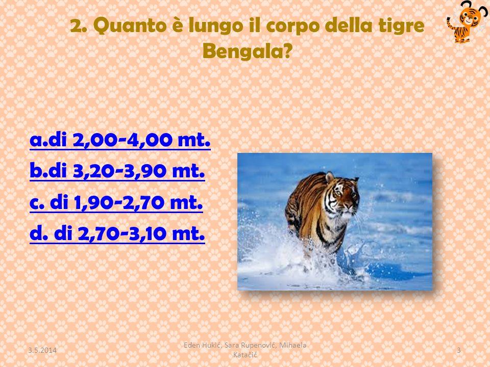 2. Quanto è lungo il corpo della tigre Bengala