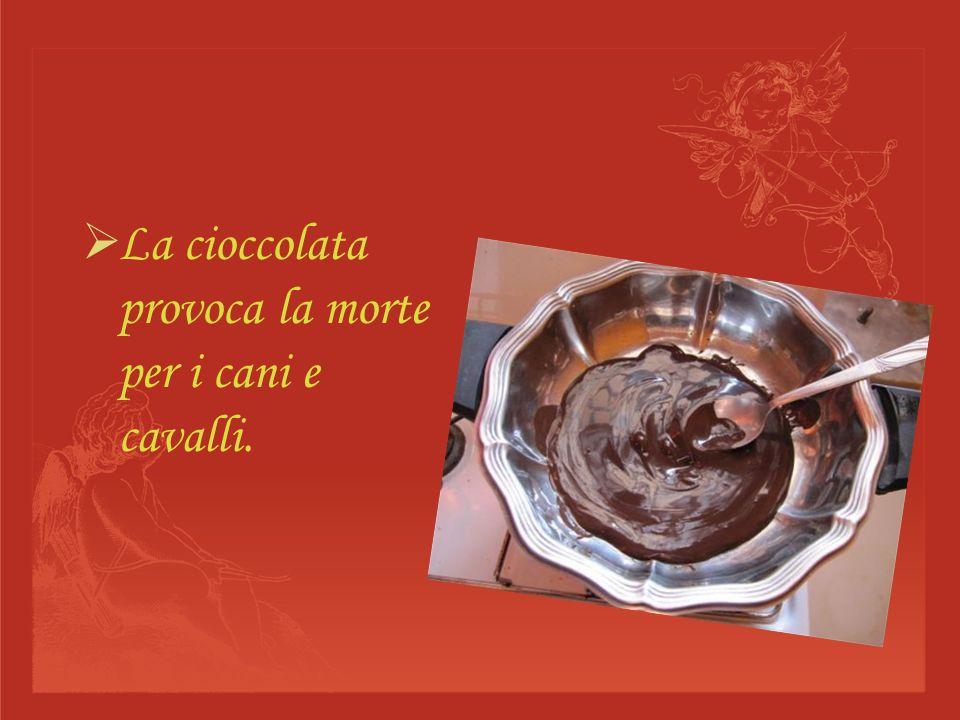 La cioccolata provoca la morte per i cani e cavalli.