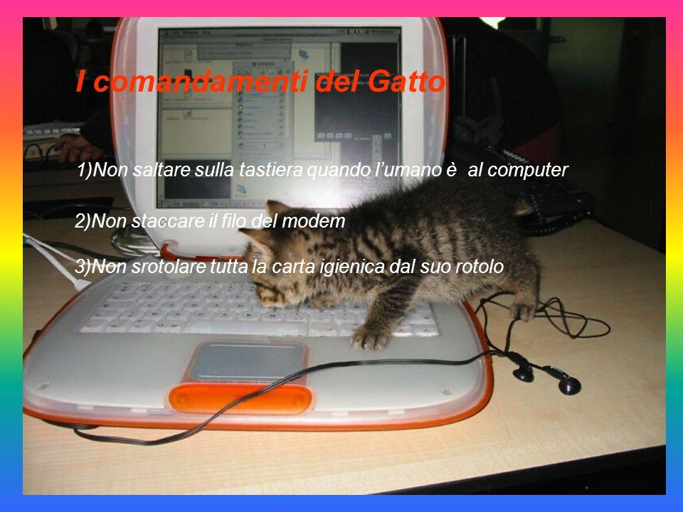 I comandamenti del Gatto