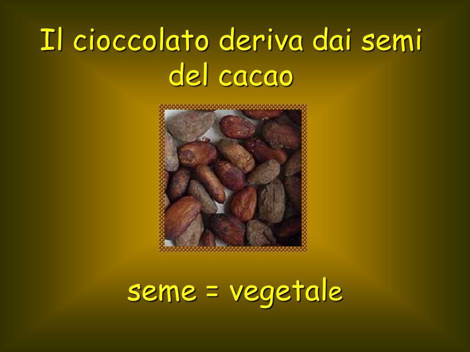 Il cioccolato deriva dai semi del cacao