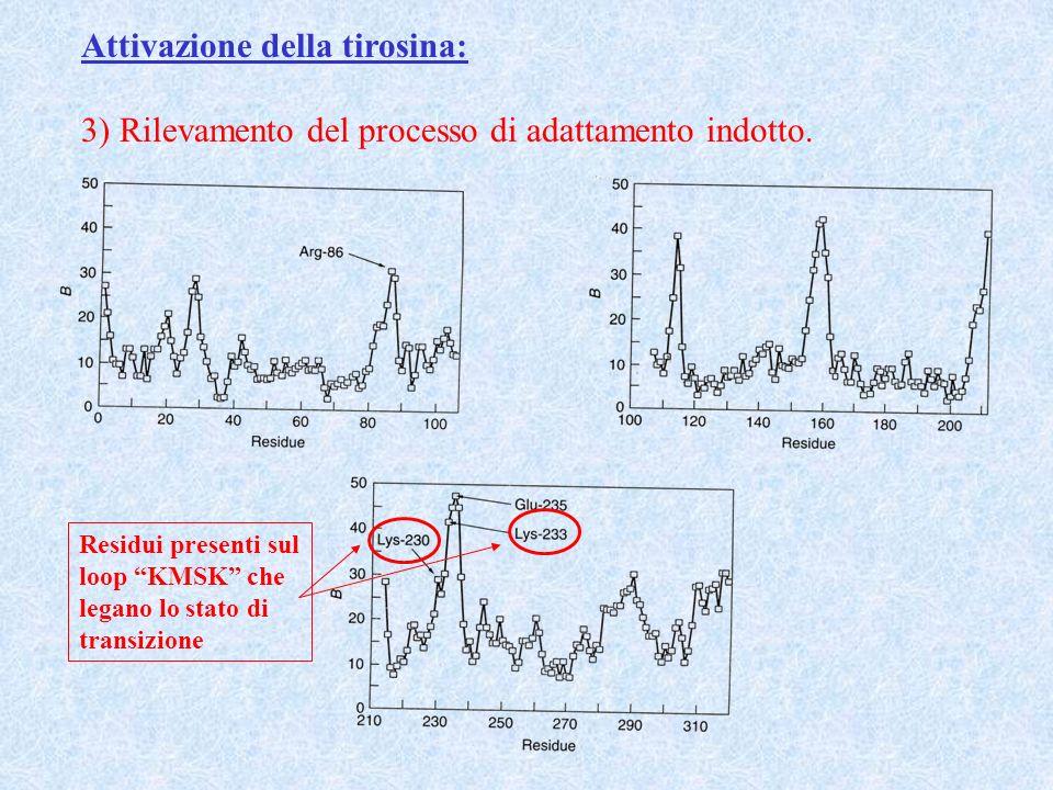 Attivazione della tirosina: