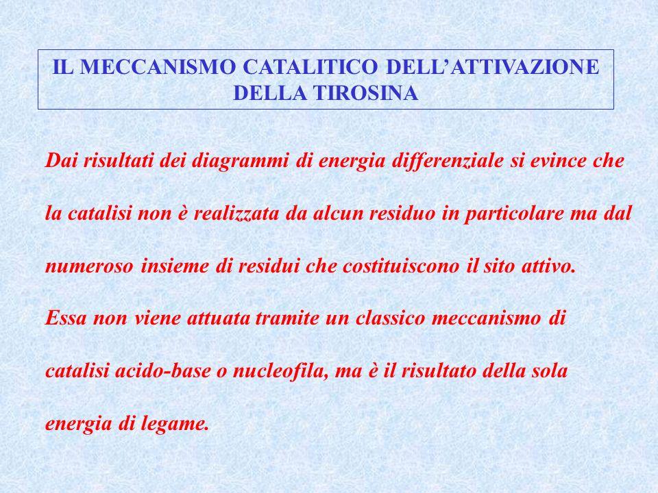 IL MECCANISMO CATALITICO DELL'ATTIVAZIONE