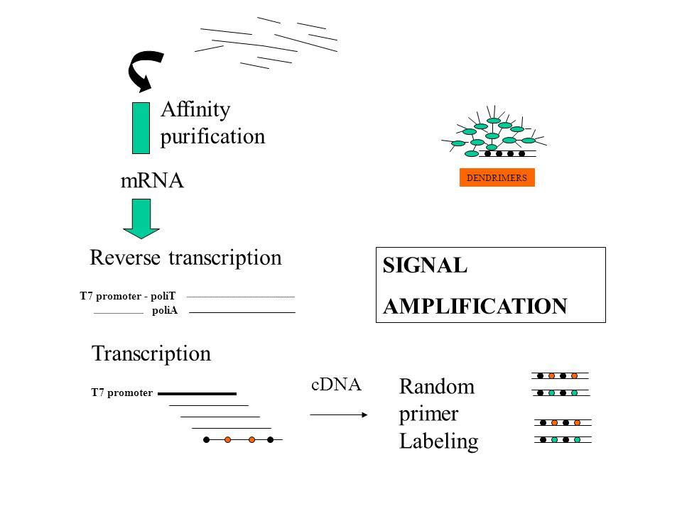 Reverse transcription SIGNAL AMPLIFICATION