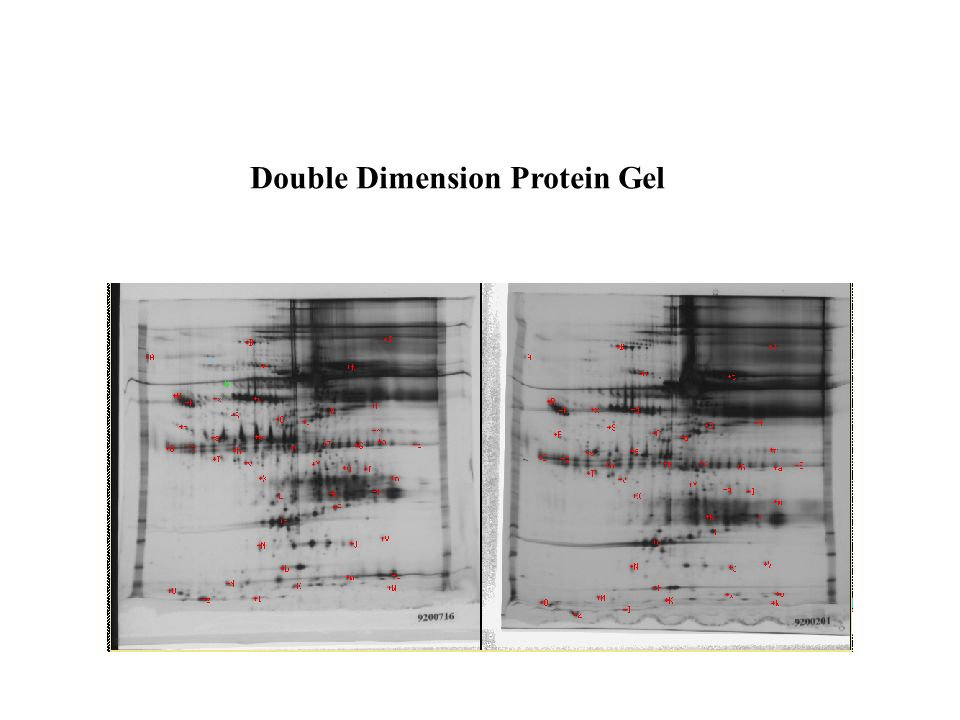 Double Dimension Protein Gel