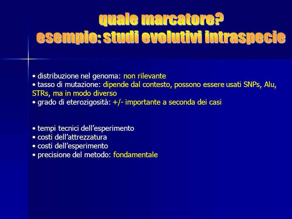 esempio: studi evolutivi intraspecie