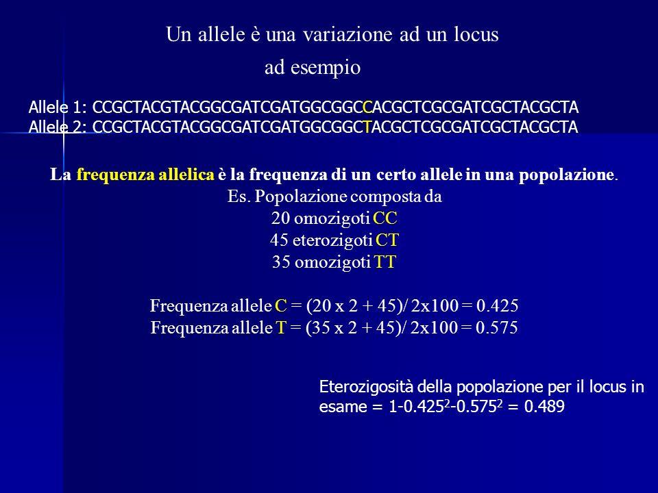 Un allele è una variazione ad un locus