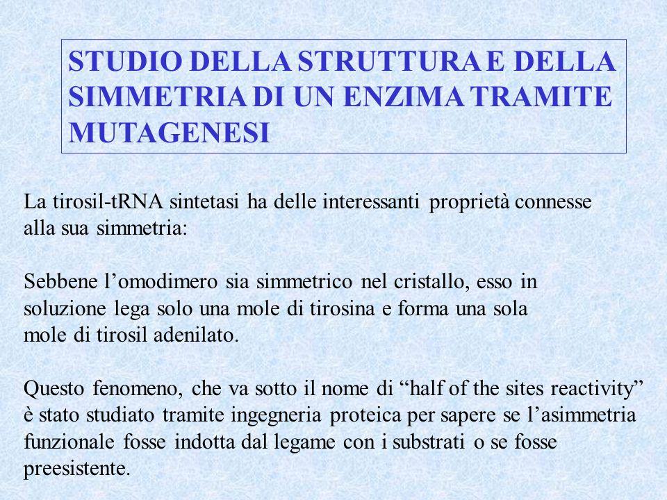 STUDIO DELLA STRUTTURA E DELLA SIMMETRIA DI UN ENZIMA TRAMITE