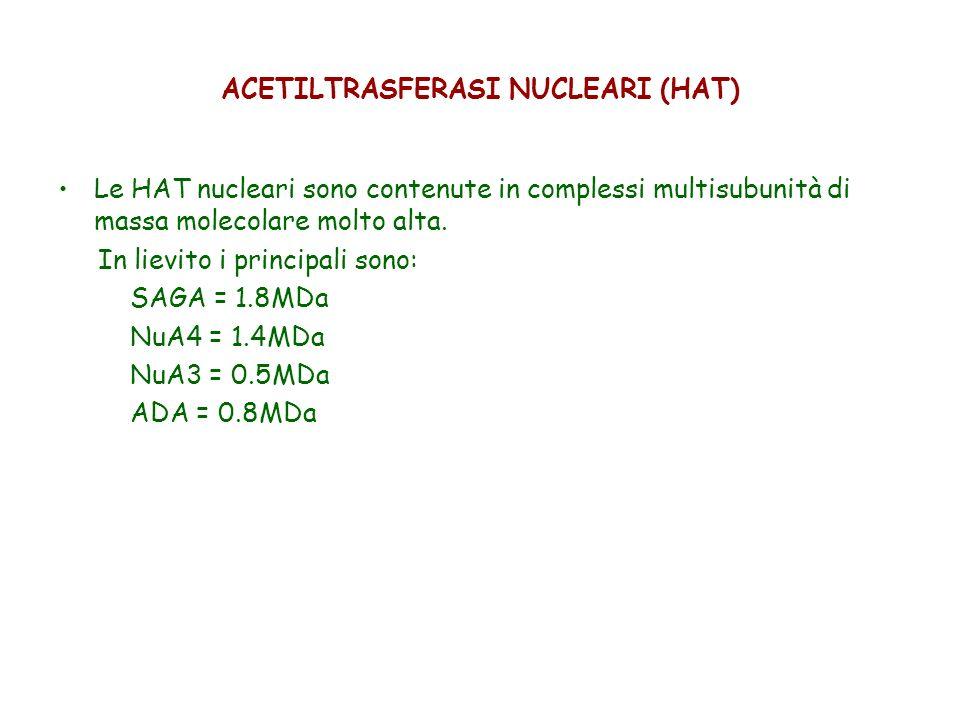ACETILTRASFERASI NUCLEARI (HAT)