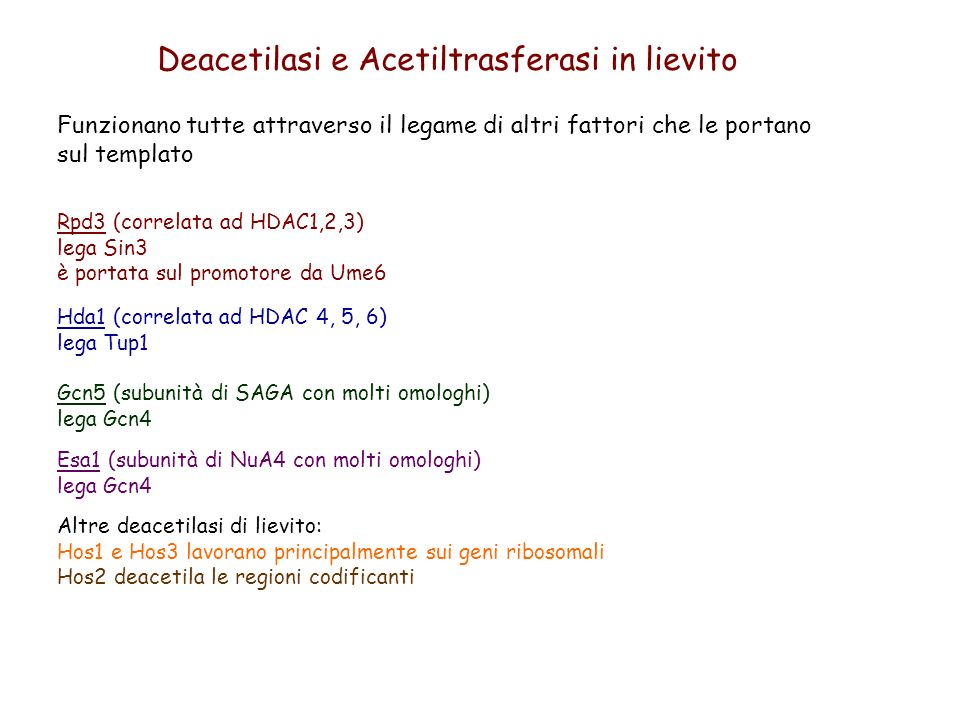 Deacetilasi e Acetiltrasferasi in lievito