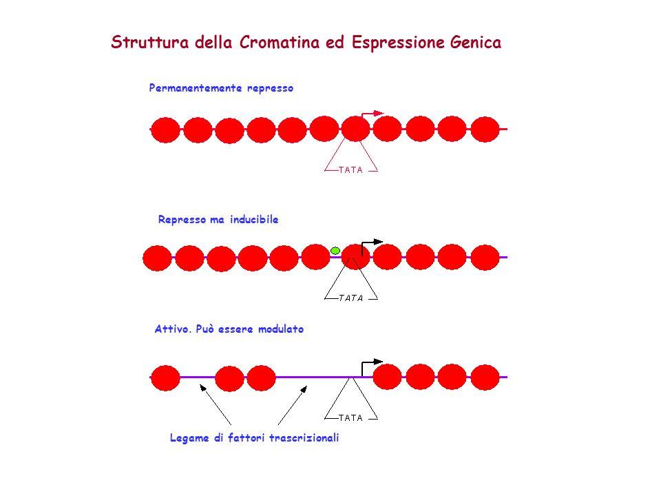 Struttura della Cromatina ed Espressione Genica