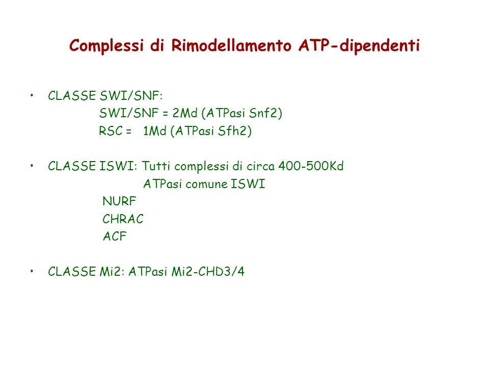 Complessi di Rimodellamento ATP-dipendenti