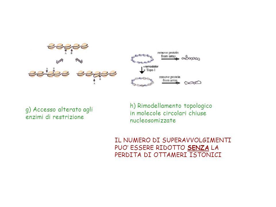 h) Rimodellamento topologico