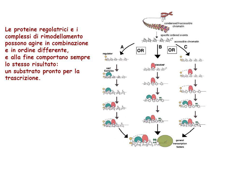 Le proteine regolatrici e i